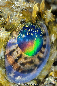 &quot;RAINBOW&quot;